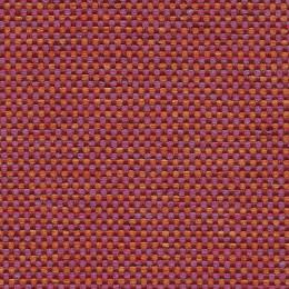 Shire_Tulip_150[1]